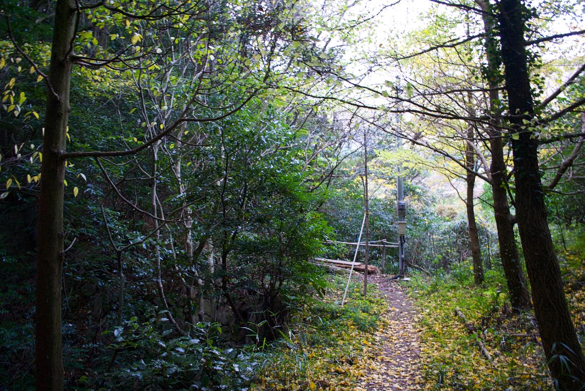 myoban bamboo forest